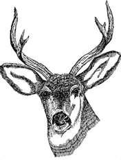 Deer Mineral Supplement-0